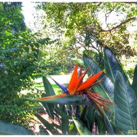 Photo taken at Marie Selby Botanical Gardens by TEC I. on 8/3/2016