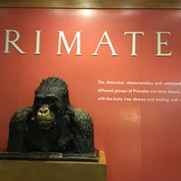 Photo taken at Hall Of Primates by Emilie A. on 3/17/2016