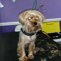 Photo taken at The Purple Pooch Bakery Boutique Groomer by Lenora S. on 5/2/2015