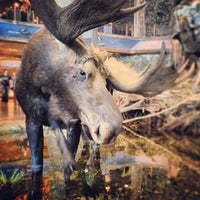 Photo taken at Bass Pro Shops by Greg H. on 1/6/2013