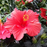 Photo taken at Lynde Greenhouse & Nursery by Nicole C. on 5/15/2014