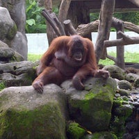 Photo taken at Kebun Binatang Gembira Loka by Yusuf H. on 12/13/2012