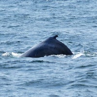 Photo taken at New England Aquarium Whale Watch by Hung L. on 7/1/2013