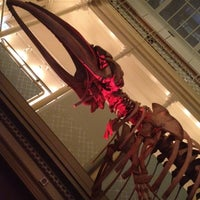 Photo taken at Australian Museum by Katie H. on 10/30/2012