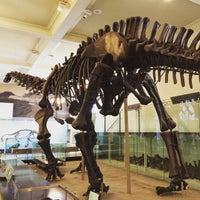 Photo taken at World's Largest Dinosaurs Exhibit at the American Museum of Natural History by Hide T. on 5/8/2015