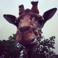 Photo taken at Elmwood Park Zoo by Jennifer O. on 5/24/2013