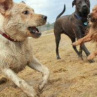 Photo taken at Normanskill Dog Park by Dylan B. on 3/25/2014