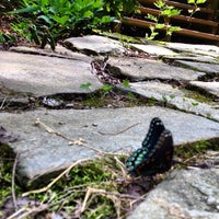Photo taken at Chattahoochee National Forest by Aaron R. on 7/4/2014
