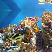 Photo taken at New England Aquarium by Cüneyt Ş. on 11/12/2012