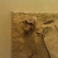 Photo taken at Hall Of Primates by David K. on 11/23/2012