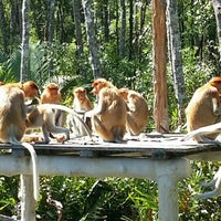 Photo taken at Labuk Bay Proboscis Monkey Sanctuary by Dirkjan L. on 5/9/2015