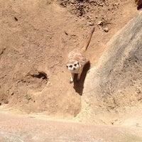 Photo taken at Meerkat Exhibit by Dean O. on 4/21/2014