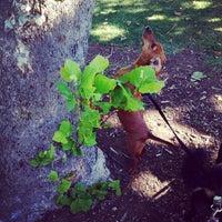 Photo taken at Carmichael Dog Park by Julie M. on 6/18/2014