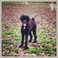 Photo taken at Carmichael Dog Park by Julie M. on 1/3/2013