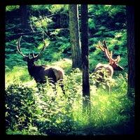 Photo taken at Northwest Trek Wildlife Park by Erik H. on 7/26/2013
