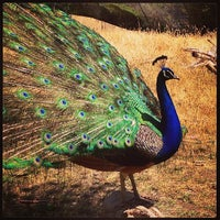 Photo taken at San Francisco Zoo by Julie C. on 5/25/2013