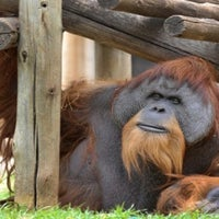 Photo taken at Monkeys Of The Zoo by William B. on 12/1/2012