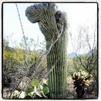 Photo taken at Arizona-Sonora Desert Museum by Karin F. on 12/26/2012