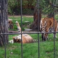 Photo taken at Calgary Zoo by Breanna on 5/14/2013