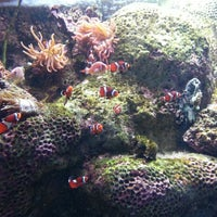 Photo taken at Adventure Aquarium by Joe L. on 1/18/2013