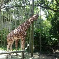 Photo taken at Audubon Zoo by Megan L. on 7/12/2013