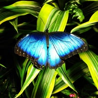 Photo taken at The Butterfly Conservatory at the American Museum of Natural History by Thiago A. on 2/4/2013