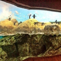 Photo taken at Penguin House at Riverbanks Zoo by Stacie W. on 12/15/2012
