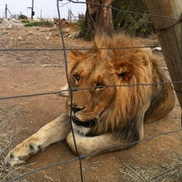 Photo taken at Felidae Centre by Diondra C. on 9/20/2012