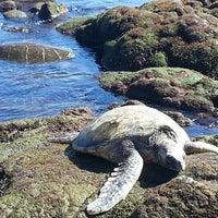 Photo taken at Punalu'u Black Sand Beach by Sarah D. on 12/18/2012