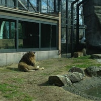 Photo taken at George H. Carroll Lion Habitat by Jeremy B. on 2/16/2013