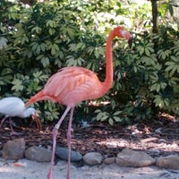 Photo taken at Busch Gardens Tampa by Marie on 11/24/2012