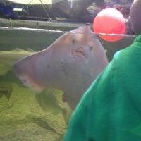 Photo taken at Ilfracombe Aquarium by Rene P. on 5/27/2014