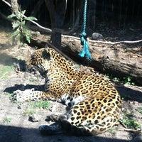 Photo taken at Zoológico de Chapultepec by Diana V. on 1/6/2013