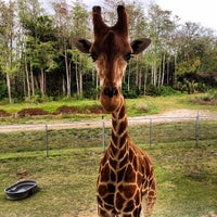 Photo taken at Lion Country Safari by Max R. on 3/20/2013