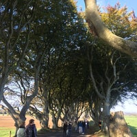 Photo taken at The Dark Hedges by Paloma B. on 10/25/2016