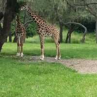 Photo taken at Disney's Animal Kingdom by Sandy R. on 7/28/2013