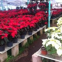 Foto tomada en Mercado de Plantas y Flores  Madreselva por Augusto G. el 12/5/2012