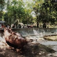 Photo taken at Dusit Zoo by Padung B. on 3/27/2014