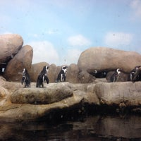 Photo taken at Penguin Tank by Marisol d. on 11/25/2016