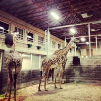 Photo taken at African Forest @ Houston Zoo by Avigdor - Realtor M. on 11/3/2012