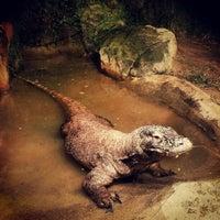 Photo taken at Houston Zoo by Avigdor - Realtor M. on 11/3/2012