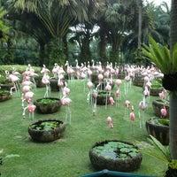 Photo taken at Nong Nooch Garden & Resort by Ostap D. on 2/5/2013