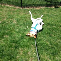 Photo taken at MSPCA Adoption Center by Alison M. on 5/3/2015