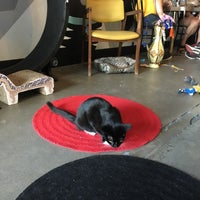 Cat Cafe In Boise