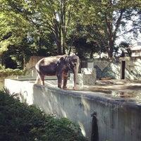 Photo taken at Inokashira Park Zoo by Nobuya O. on 8/19/2012