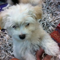 Photo taken at Russo's Pet Experience by Scott A. on 2/7/2012