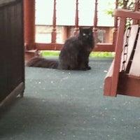 Photo taken at Black Cat Spotting by Chloe E. on 4/1/2012