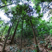 Photo taken at Bukit Nanas Forest Reserve by Ee K. on 4/21/2016