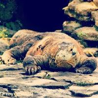 Photo taken at Kebun Binatang Gembira Loka by Ecko E. on 4/5/2013