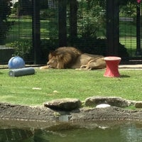 Photo taken at George H. Carroll Lion Habitat by Cindy P. on 7/26/2013
